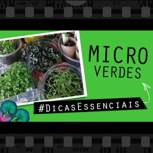 microverdes microgreens